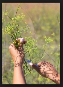 Anise-weeding