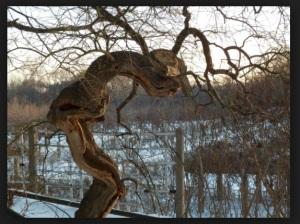 Metal Slut Tree